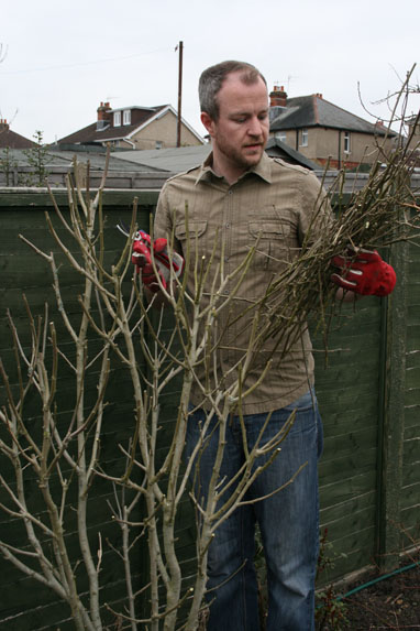 Spring Pruning What To Cut Back Now Amateur Gardening