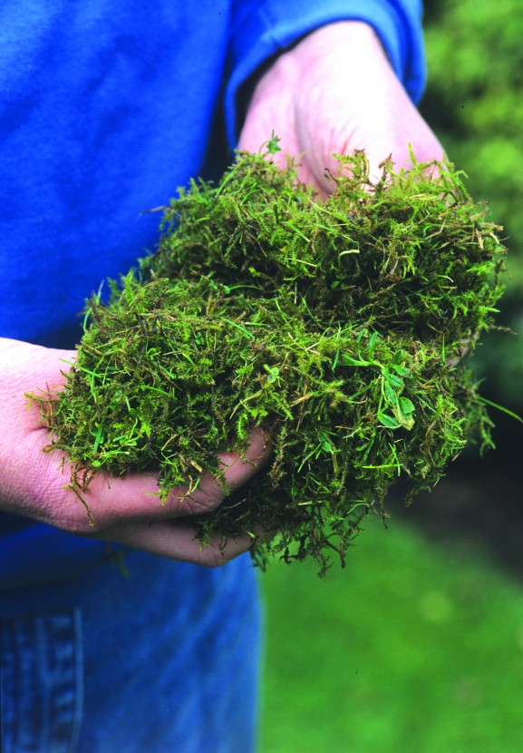 Moss Attacks The UK's Lawns