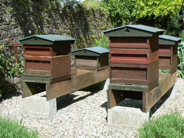 Bee hives should ideally be situated at ground level