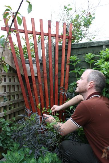 Diy Fan Trellis Amateur Gardening
