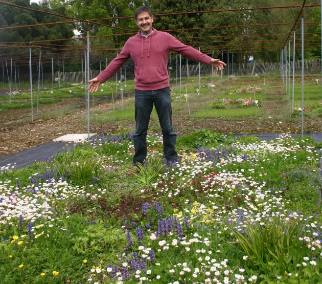 scientist creates grass free flowering lawns