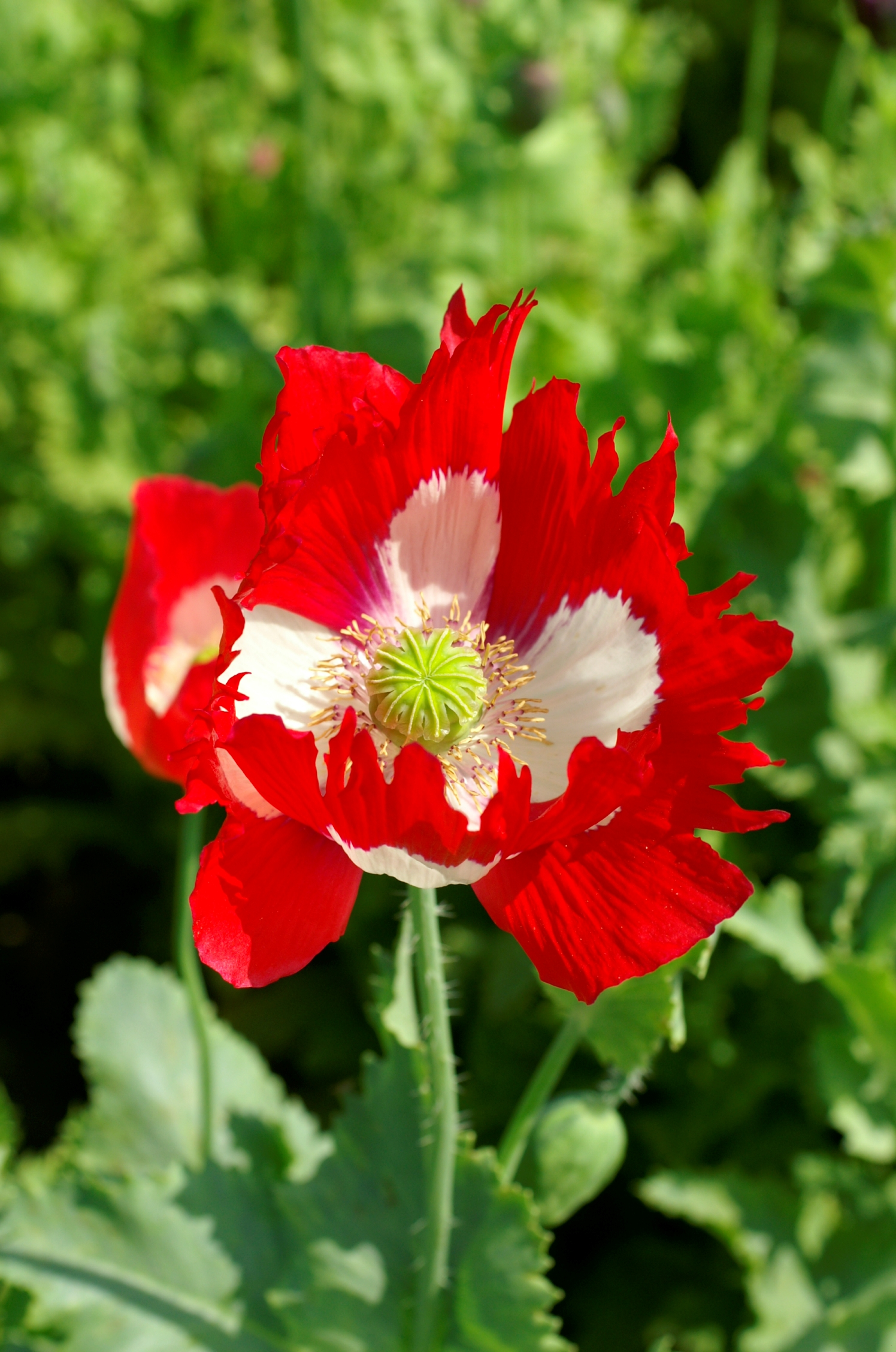 Seed firm to honour britains fallen soldiers amateur gardening poppy victoria cross mightylinksfo