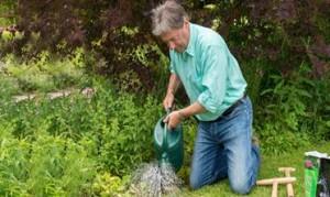 Repair your lawn