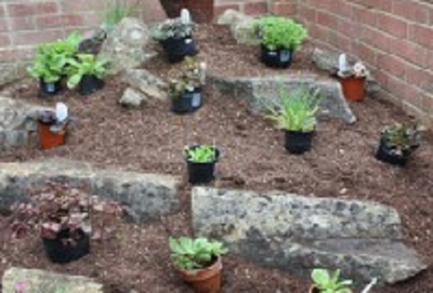 Create An Alpine Rockery Amateur Gardening Enchanting Alpine Garden Design