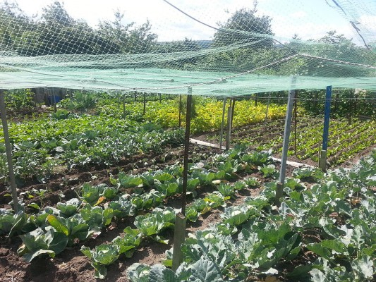 Farm Terrace Allotments in Watford are under threat again