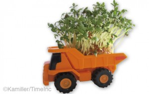 Sowing cress seed with small children