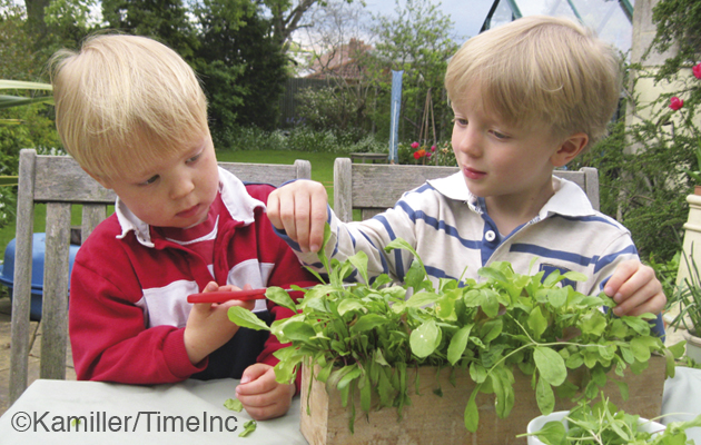 Growing salad - quick crops for children