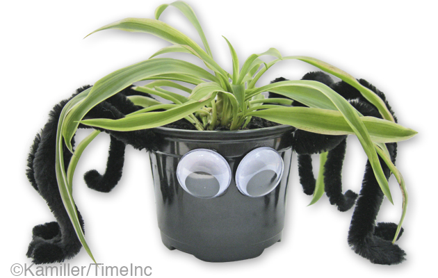 Spooky spider pots for Halloween - a great project for children