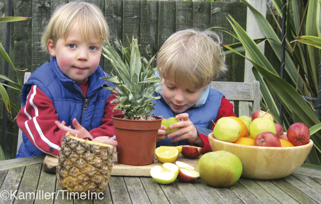 How To Grow Fruit Pips A Great Gardening Project For Kids
