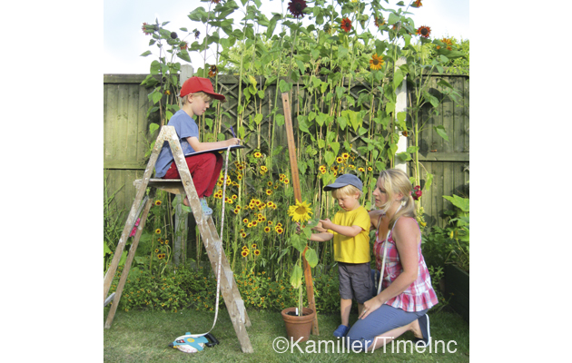 Growing sunflowers with children - a great kids project