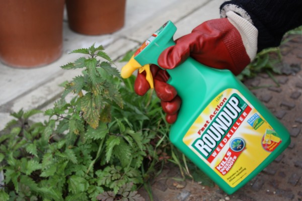 Glyphosate weedkillers like Roundup remail approved for use