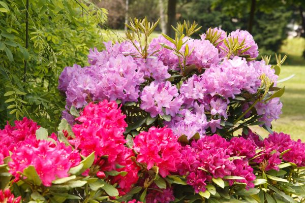 The gardens will be full of spring plants such as rhododendrons