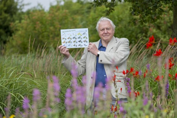 Sir David Attenborough says butterflies are in trouble