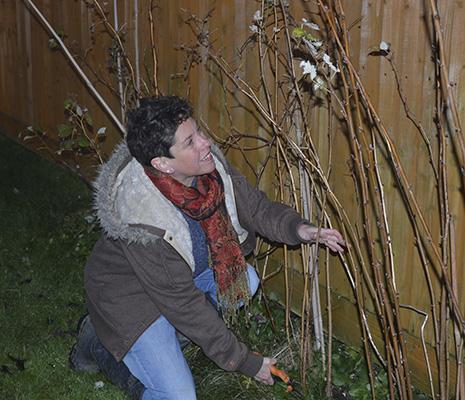 How to prune autumn raspberries - Amateur Gardening