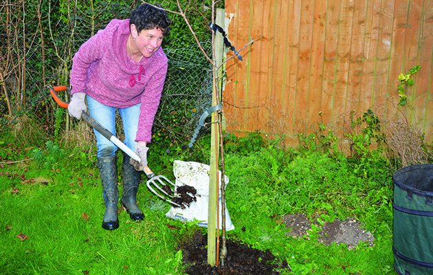 How to move a deciduous tree - Amateur Gardening
