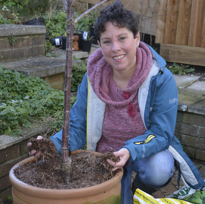 How to plant bare-root and pot-grown trees - Amateur Gardening