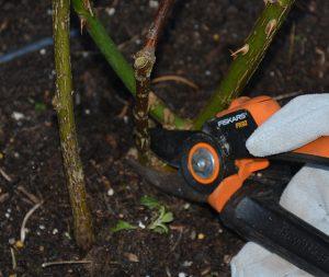 web 1cutting dead wood_172515151_269050431