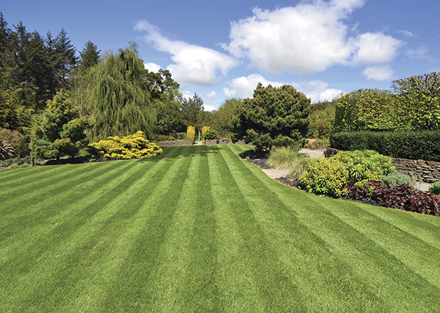 Your Lawn Serves As A Huge Source Of Air Conditioning For Your Garden And  Also Releases Oxygen And Simultaneously Captures Dust, Keeping You And Your  Family ...