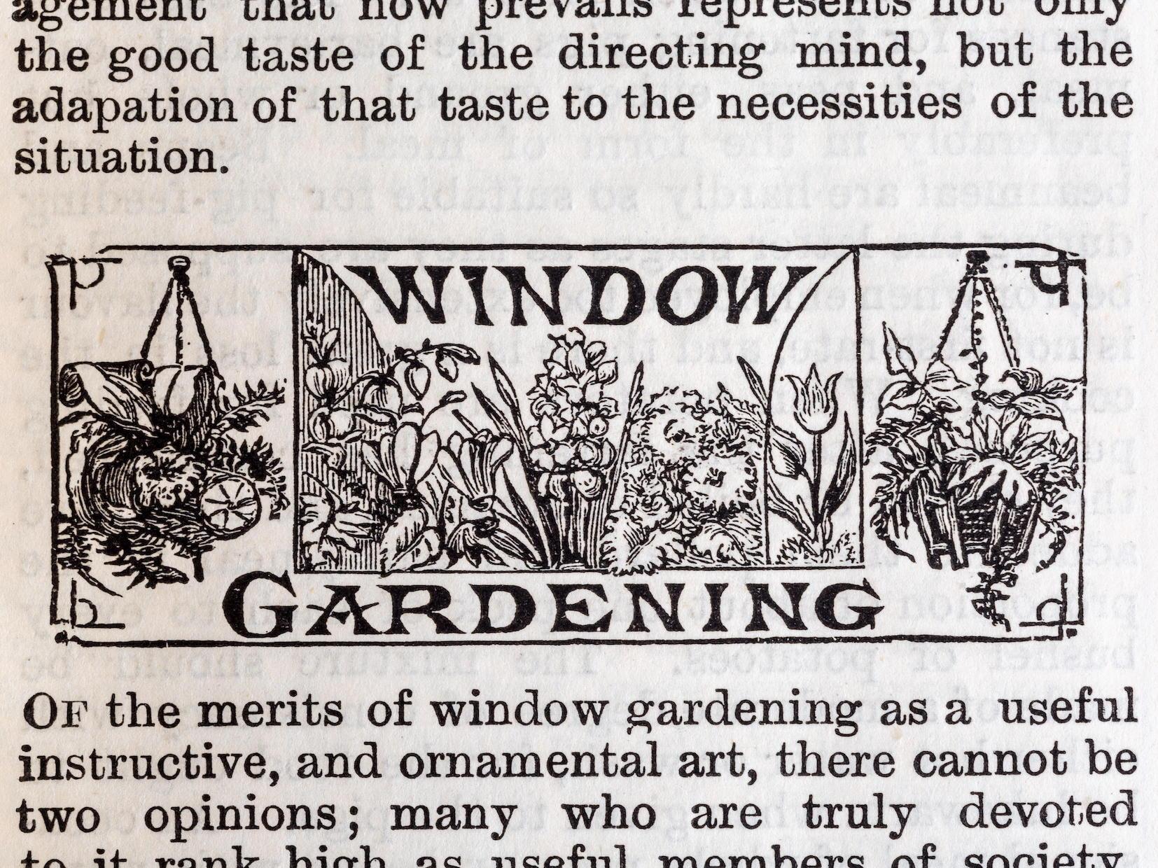 Shirley Hibberd Window Gardening Clip