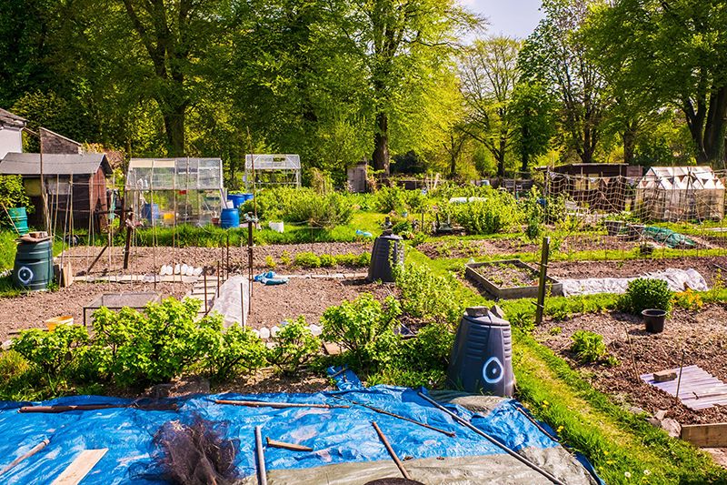 The National Allotment Society - Amateur Gardening