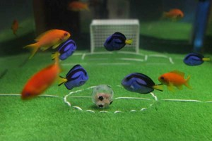 World Cup fish | Best boating photos 22 - 28 May 2010 | Motor Boats Monthly |
