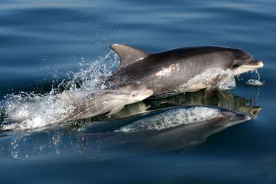 Dolphin pictures | News | Motor Boats Monthly |