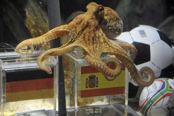 Paul the Octopus | Best Boating photos | Motor Boats Monthly |