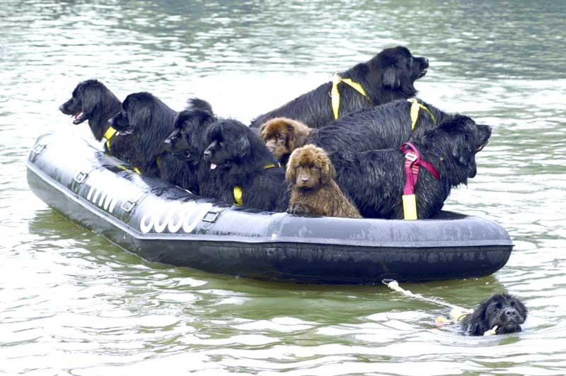 Canine lifeguards