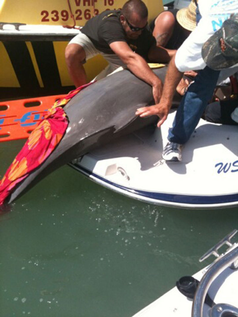 Dolphin lands on motor boat | Motor Boats Monthly