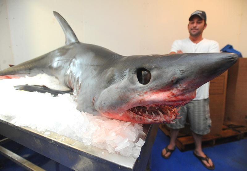 Shark lands in boat