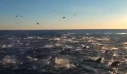 BBC-dolphins-video.jpg