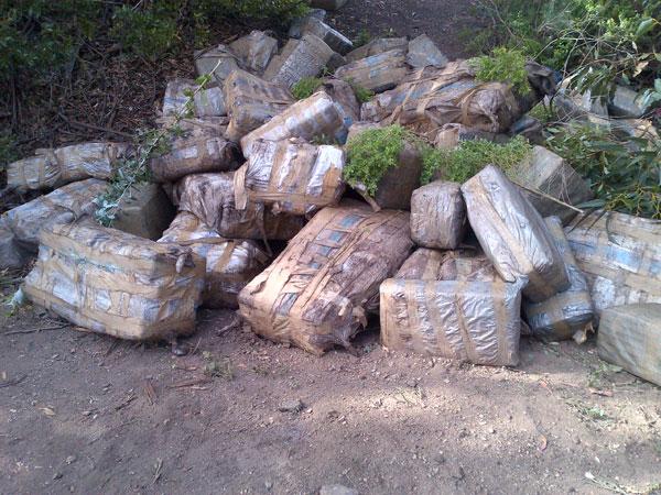 California-drug-haul.jpg