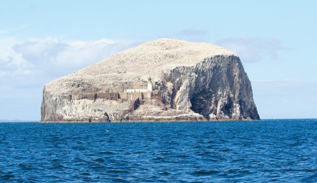 Bass Island, North Berwick. All photos: Nigel Boutwood