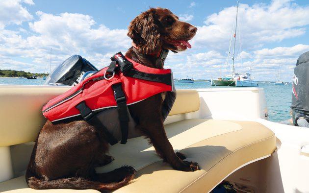 Editors-Choice-Red-Original-Dog-Buoyancy-Aid-credit-Red-Original