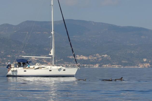 dolphin ionian greece