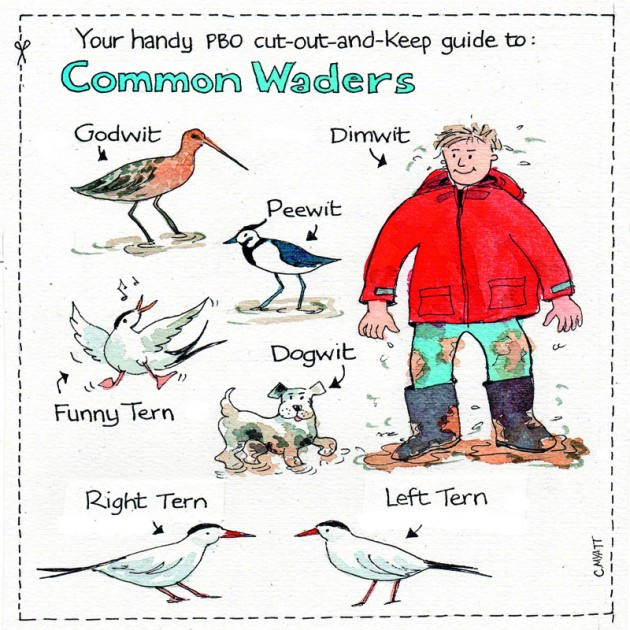Dave Selby PBO column illustration by Claudia Myatt - birds