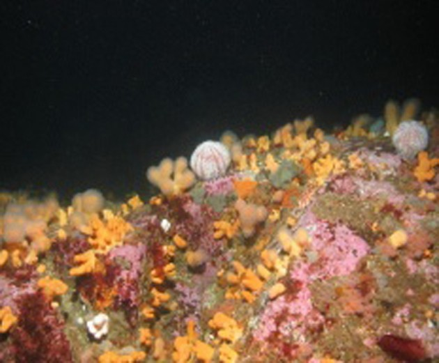 Scottish MPAs_Image courtesy of Joint Nature Conservation Committee
