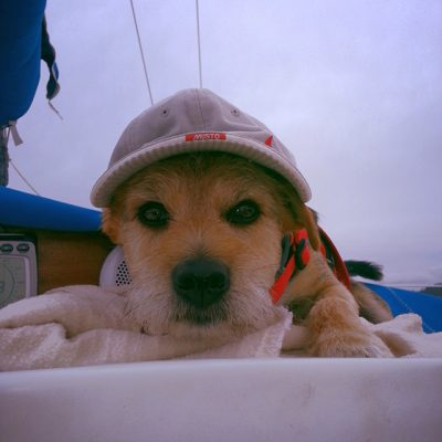 this-is-saxo-who-was-a-rescue-dog-and-has-been-a-constant-source-of-amusement-with-his-terrier-type-personality-and-loves-to-go-ashore-somewhere-new-peter-kinver
