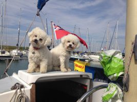 Snowy and Tofu supervising Titchmarsh Marina in August 2016 from Michael Garratt