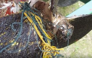 Fishing gear wrapped around a prop