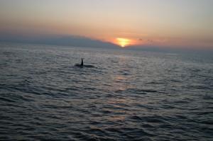 001-clyde orca.JPG