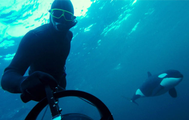 VIDEO: Sailing and free diving with orcas - power-boating