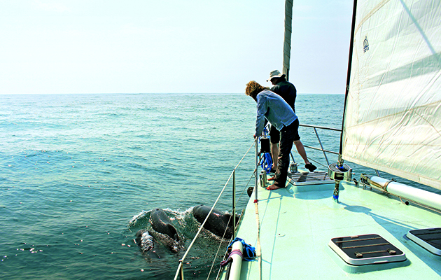 Eco friendly sailing - watching dolphins