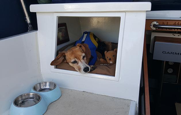 Un chien dormant dans un cubby sur un yacht