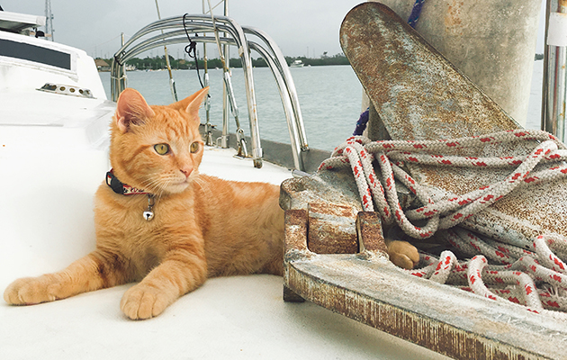 A cat lying on the deck of a yacht