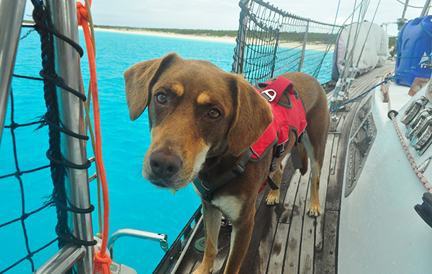 A dog wearing a lifejacket on board a yacht