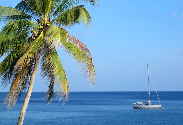 A yacht anchored in a bay with a palm tree