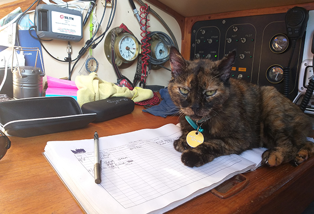 A cat sitting on a chart table on a yacht