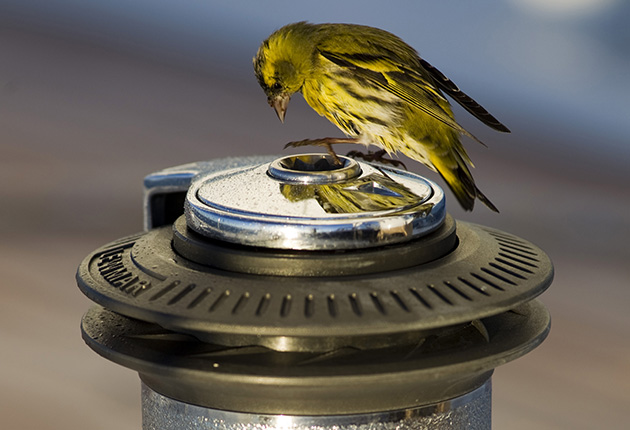 A bird looking at its reflection on a boat winch
