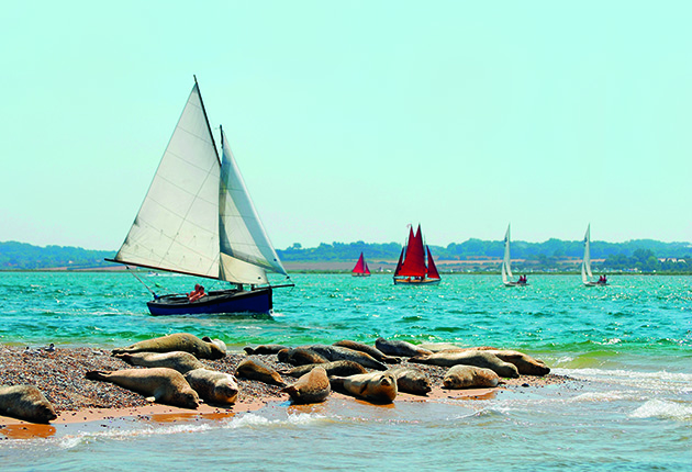 A boat sailing close to a colony of seals. The east coast is good for wildlife watching